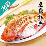 尼羅紅魚2尾(500~600g/尾)