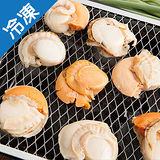 日本直送超大顆熟凍帆立貝1盒(500g±5%/盒)