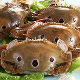 【上野物產】三點蟹10隻(200g土10%/隻)