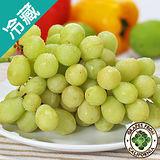 智利綠葡萄3斤(600g±5%/斤)