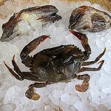 買一送一【台北濱江】生凍軟殼蟹1盒(10隻裝/盒)