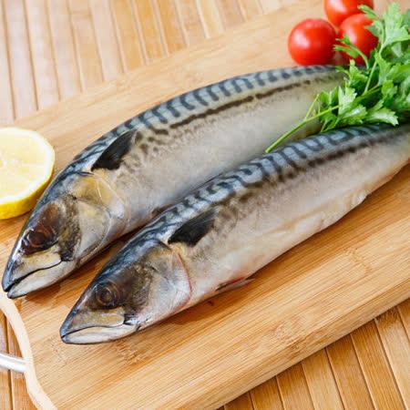 【富琳嚴選】安心好魚系列-正宗頂級挪威薄鹽鯖魚(3尾入)免運