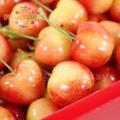【鮮果日誌】智利空運頂級白櫻桃(精美禮盒2公斤)