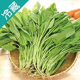 產銷履歷菠菜2包(250g±5%/包)