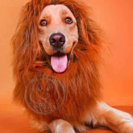 【真心勸敗】gohappy快樂購一秒變獅子!獨家寵物獅子假髮頭飾XL號36-72CM評價怎樣花蓮 遠 百 營業 時間