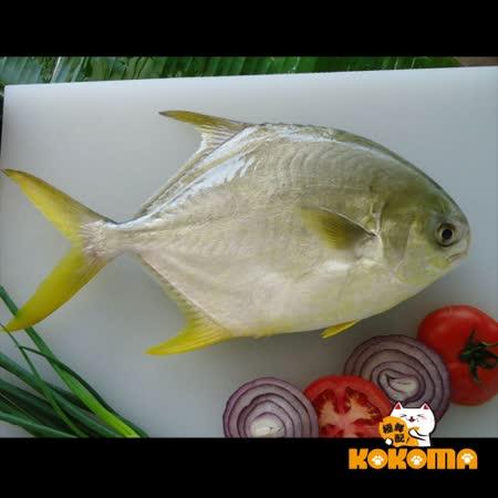 【極鮮配】黃金鯧魚(800g±10%/尾)甘甜細緻有彈性!