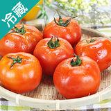 產銷履歷牛蕃茄2盒(600G±5%/盒)
