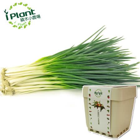 iPlant 積木小農場 - 青蔥︱ 開心農場自家有