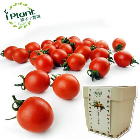 iPlant 積木小農場 -小番茄︱ 開心農場自家有