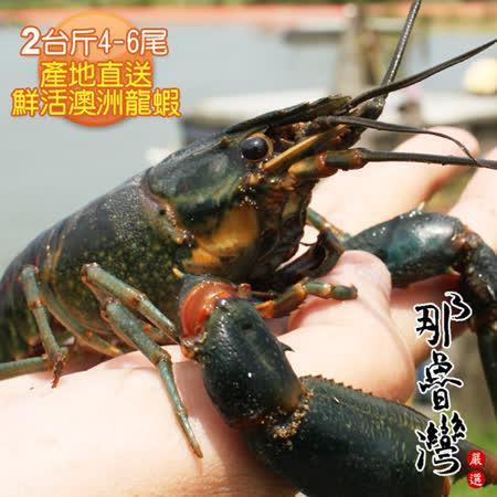 【那魯灣】產地直送鮮活澳洲龍蝦2台斤(4-6尾/台斤)
