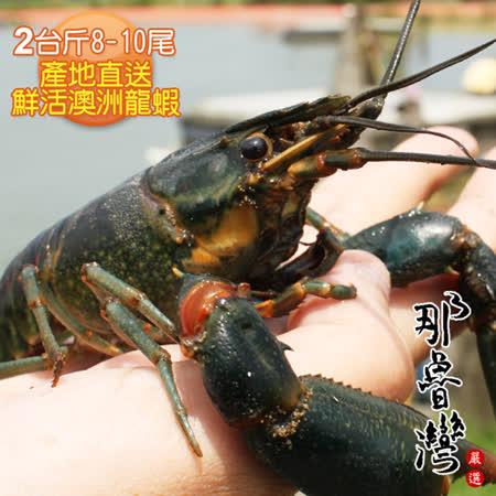 【那魯灣】產地直送鮮活澳洲龍蝦2台斤(8-10尾/台斤)