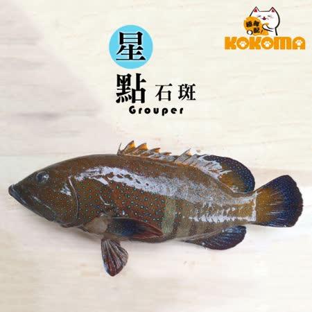 【極鮮配】野生星點石斑(200G-300G*3隻)
