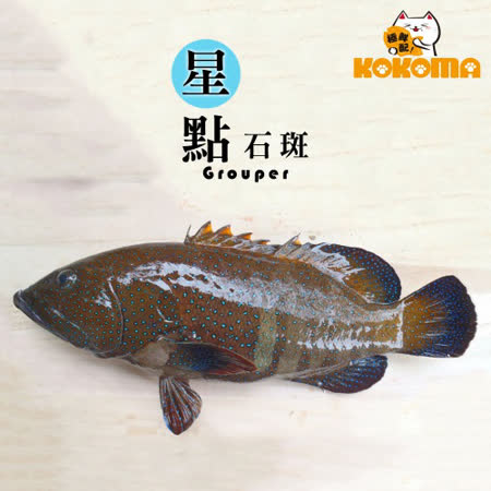 【極鮮配】野生星點石斑(200G-300G)(任選)