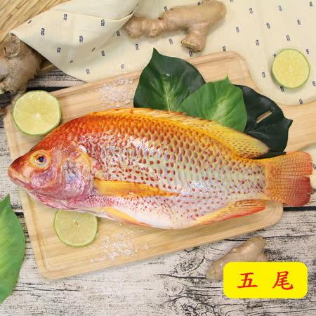 【鱻來厚道】海紅鯛 (每尾一盒/550G) /買五送一優惠組(免運費)