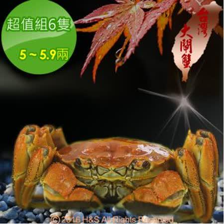 【台灣大閘蟹】鮮活超值組6隻(5~5.9兩/隻)