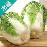 韓國山東大白菜2粒(1.2Kg±10%/粒)