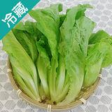 有機轉型期福山萵苣(250g±5%/包)