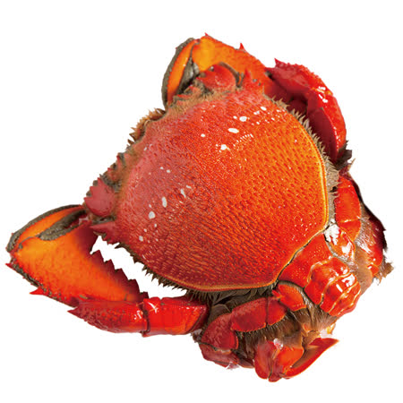 【寶島福利站】澳洲特等熟凍母旭蟹( 200~300g/隻)任選