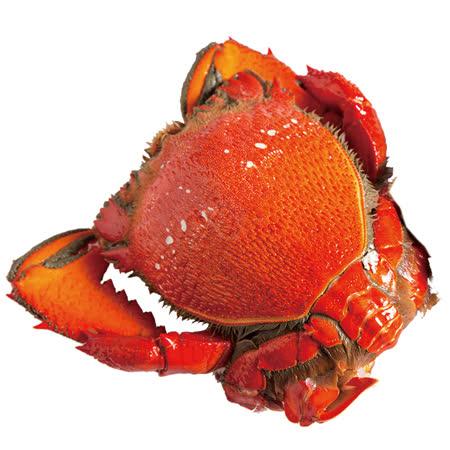 【寶島福利站】澳洲特等熟凍母旭蟹2隻( 200~300g/隻)