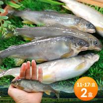 【築地一番鮮】宜蘭帶卵小香魚2盒(14尾裝/1kg/盒)免運組