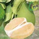 普明園 特A級台南麻豆40年老欉文旦 (10台斤/箱,約10-13顆)