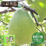 沁甜果園SSN. 台南麻豆頂級文旦(一般禮盒) (約5-7粒/5台斤)