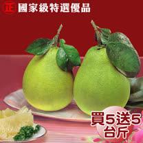 (買1送1) 國家級50年老欉特選雙重認證麻豆文旦精品禮盒5台斤