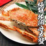 海鮮王 野生超大抱卵母花蟹*8隻組 (300g±10%/隻)
