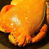 【幸福小胖】澳洲超大旭蟹3隻(600g/隻)