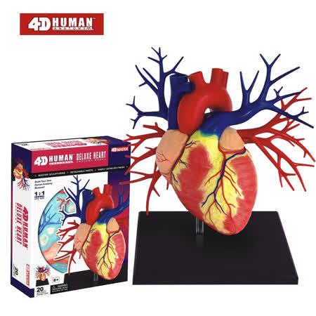 《4D MASTER》 - 人體透視 - 1:1 心臟