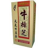 買二送一台灣牛樟芝-元氣牛蒡茶(30包入/盒)