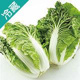 包心白菜1粒(700g/粒)