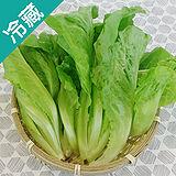 產銷履歷福山萵苣1包(250g±5%/包)