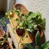 【收納職人】鄉村風收納裝飾編織置物籃PP藤編籃(長條米黃)