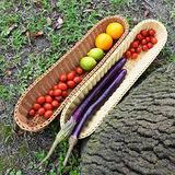 【收納職人】鄉村風收納裝飾編織置物籃PP藤編籃(長條駝色)