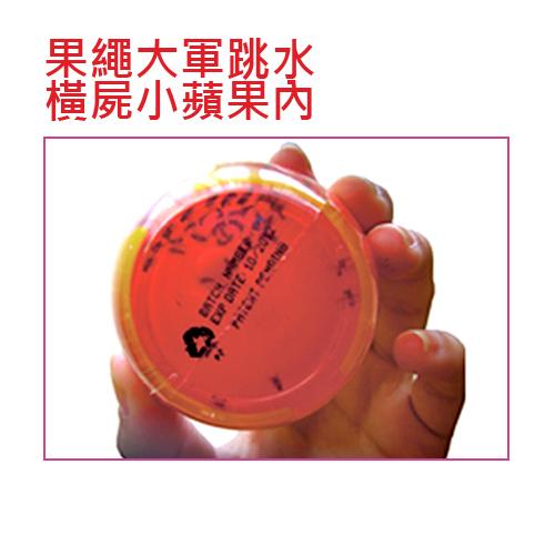 吸蠅力-果蠅誘引劑(1入)