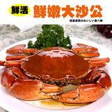 【秋蟹祭典】鮮活野生大沙公5隻(500~600g/隻)