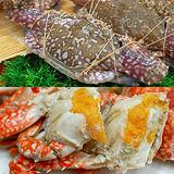 【築地一番鮮】斯里蘭卡雙蟹6隻(公花蟹3隻+母花蟹3隻)免運組