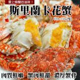 【築地一番鮮】斯里蘭卡母花蟹1隻(200~250g/隻)-任選