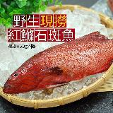 【築地一番鮮】峇里島野生紅鰷石斑魚(450±50g/條)-任選
