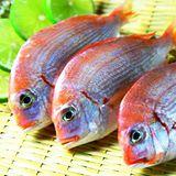 漁季 老饕必點極鮮赤鬃超值組(買就送5包挪威薄鹽鯖魚片,再贈保冰袋) 共3台斤(360g~450g/尾)