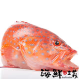 【海鮮主義】野生紅鰷石斑 (400~500g/尾)