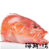 【海鮮主義】野生紅鰷石斑 (500~600g/尾)