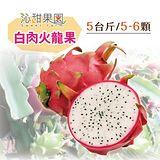 沁甜果園SSN 屏東白肉火龍果 (5-6顆裝/5台斤)